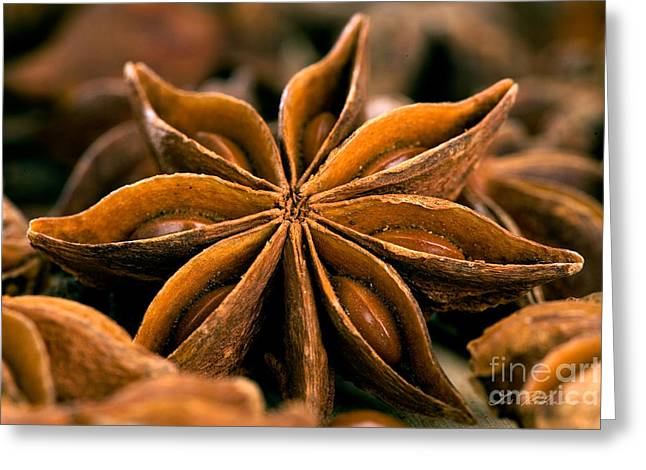 Stimulant Greeting Cards - Anise Star Greeting Card by Iris Richardson