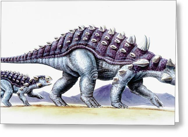 Ankylosaurus And Young Greeting Card by Deagostini/uig