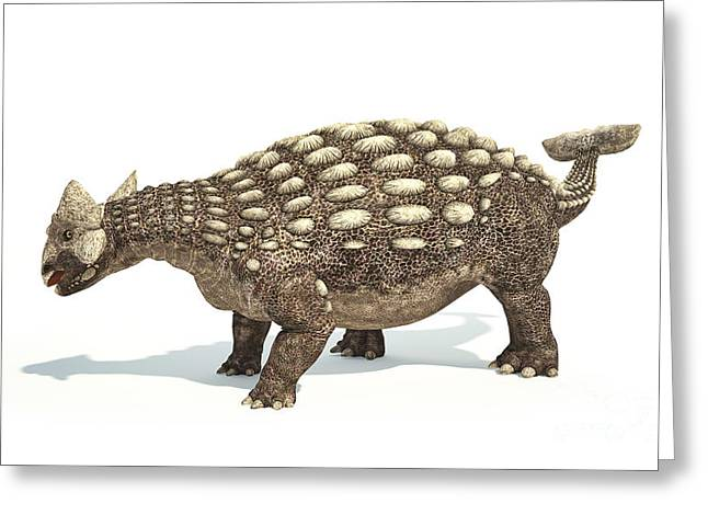 Ankylosaurus Digital Greeting Cards - Ankylosaurus Dinosaur On White Greeting Card by Leonello Calvetti