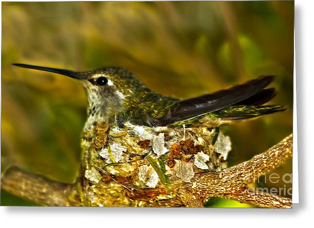 Haybale Greeting Cards - Annas Hummingbird Nesting Greeting Card by Robert Bales