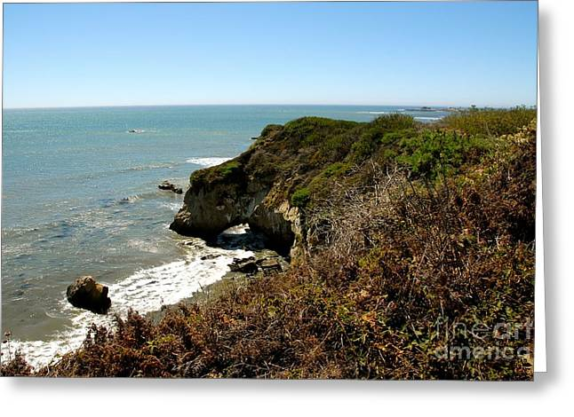 Ano Nuevo Photographs Greeting Cards - Ano Nuevo Greeting Card by Lisa Schafer