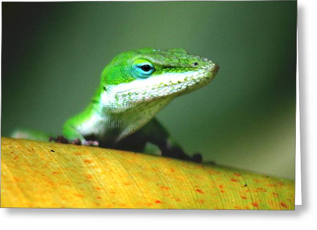 Landscapephotography Pyrography Greeting Cards - Anole Greeting Card by Ange Sylvestri