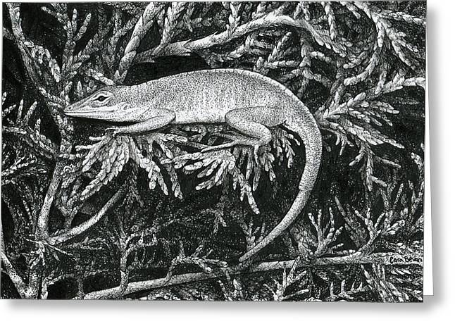 Pine Tree Drawings Greeting Cards - Anole Loafer Greeting Card by Cara Bevan