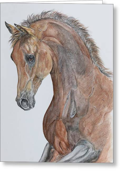 Another  Arabian Horse Greeting Card by Janina  Suuronen