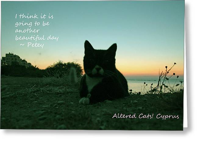 Another Beautiful Day Altered Cats Cyprus Greeting Card by Anita Dale Livaditis