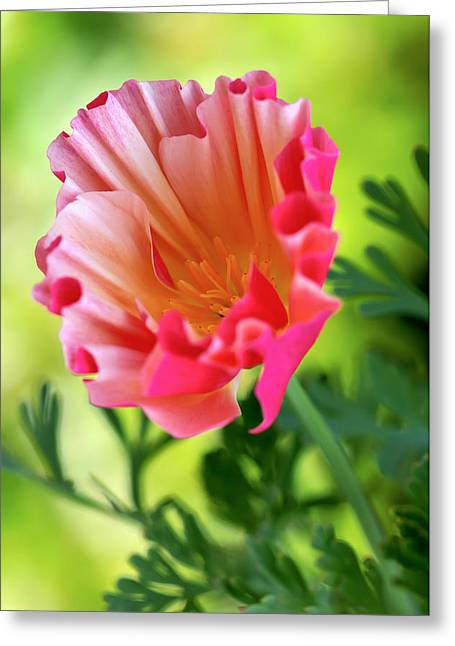 Florescence Greeting Cards - Another Glimpse Greeting Card by Heidi Smith