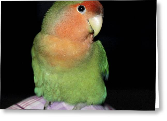 Rosy-faced Lovebird Greeting Cards - Another Knee Pickle Greeting Card by Terri  Waters