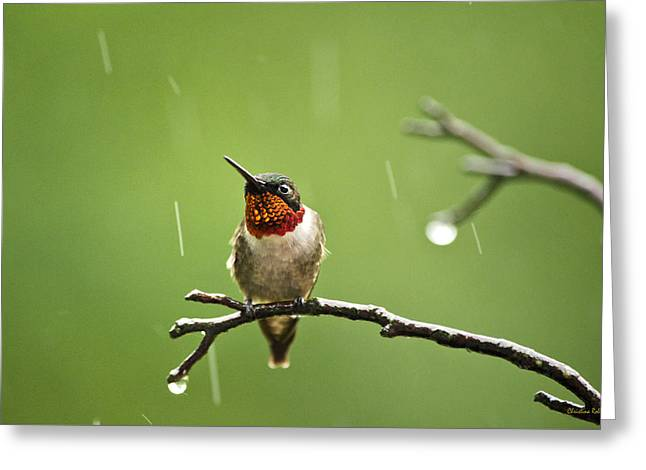 Archilochus Colubris Greeting Cards - Another Rainy Day Hummingbird Greeting Card by Christina Rollo