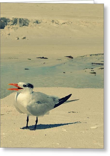 Coastal Decor Digital Greeting Cards - Another Seagull at the Beach Greeting Card by Patricia Awapara