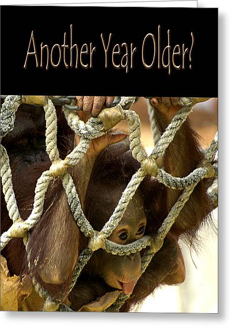 Orangutan Greeting Cards - Another Year Older Greeting Card by Carolyn Marshall