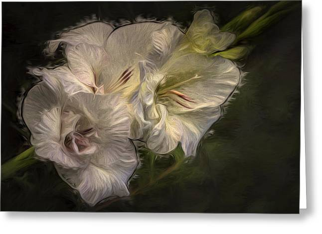Gladiole Greeting Cards - Answer Greeting Card by Vronja Photon