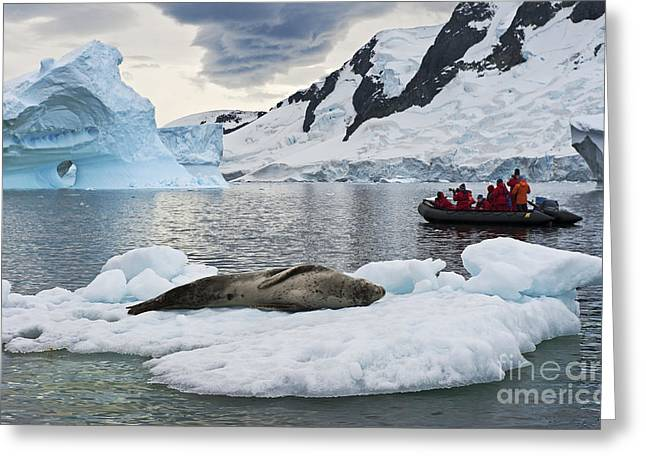 Festblues Greeting Cards - Antarctic Serenity... Greeting Card by Nina Stavlund