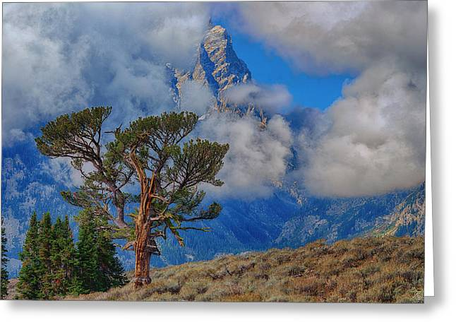 Grand Teton National Park Greeting Cards - Anticipation Greeting Card by Greg Norrell