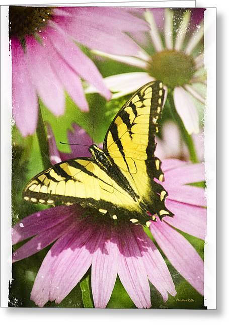 Feeding Digital Greeting Cards - Antique Butterfly Postcard No. 3022 Greeting Card by Christina Rollo
