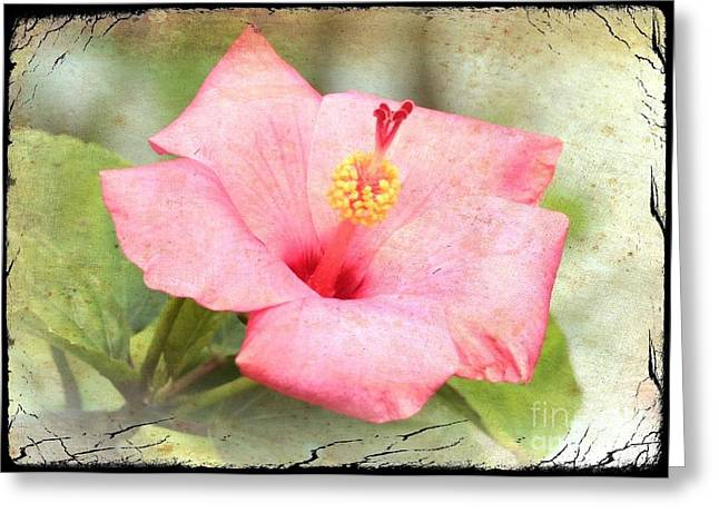 Antique Hibiscus Greeting Card by Carol Groenen