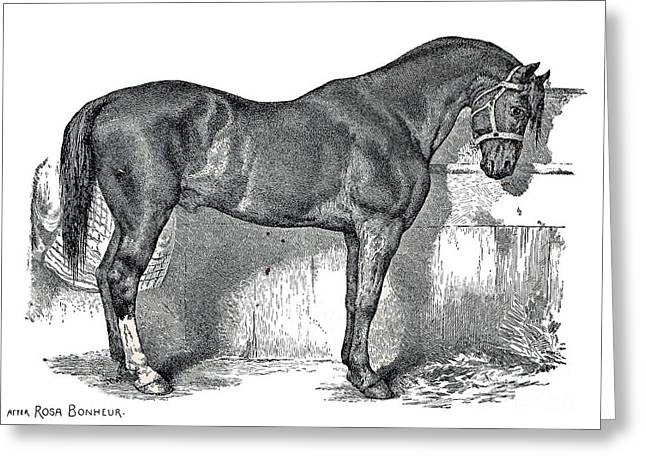 Manual Greeting Cards - Antique Horse Drawing Greeting Card by Rose Santuci-Sofranko