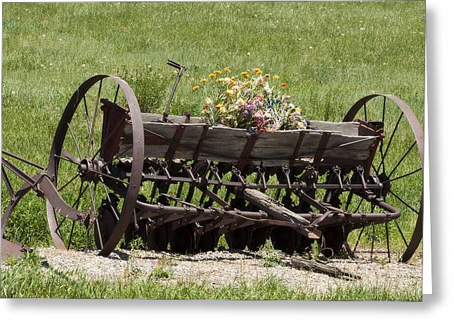 Flower Planter Jewelry Greeting Cards - Antique Horse Drawn Seeder Greeting Card by Daniel Hebard