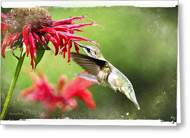 Hovering Greeting Cards - Antique Hummingbird Postcard No. 1124 Greeting Card by Christina Rollo