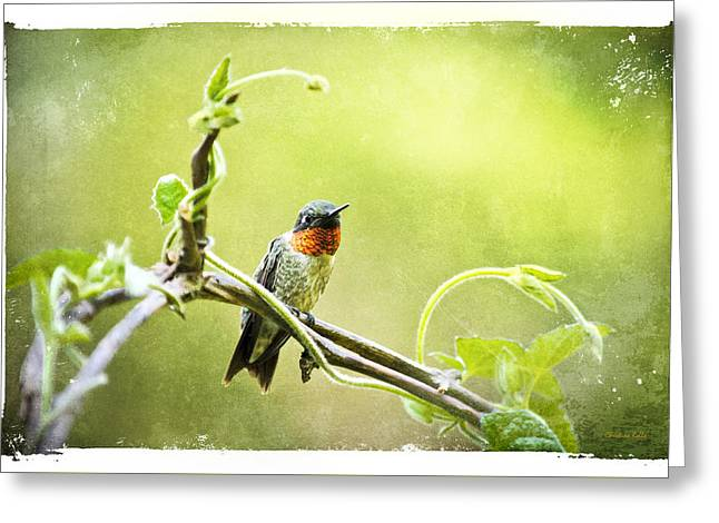 Old Relics Digital Greeting Cards - Antique Hummingbird Postcard No. 9038 Greeting Card by Christina Rollo