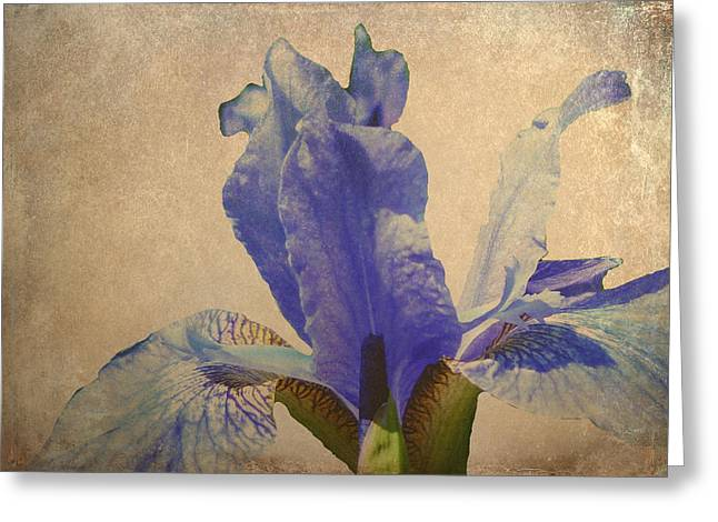 Iris Print Greeting Cards - Antique Iris Greeting Card by Sharon Lisa Clarke
