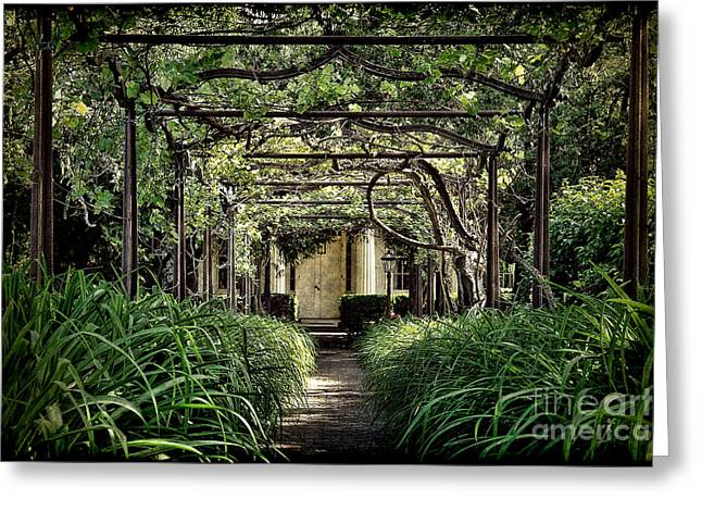 Trellis Photographs Greeting Cards - Antique Pergola Arbor Greeting Card by Olivier Le Queinec