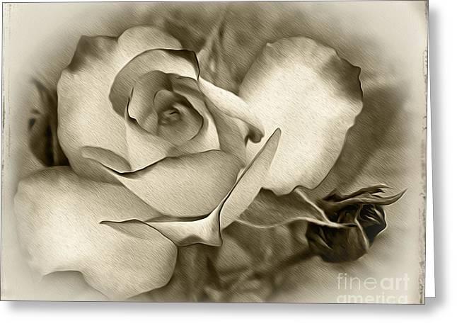 Kaye Menner Black And White Greeting Cards - Antique Rose Greeting Card by Kaye Menner
