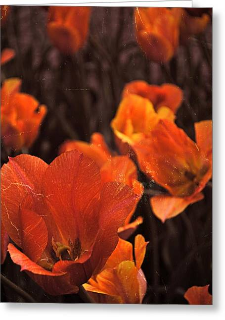 Photograph Greeting Card featuring the photograph Antiqued Tulips by Michelle Calkins