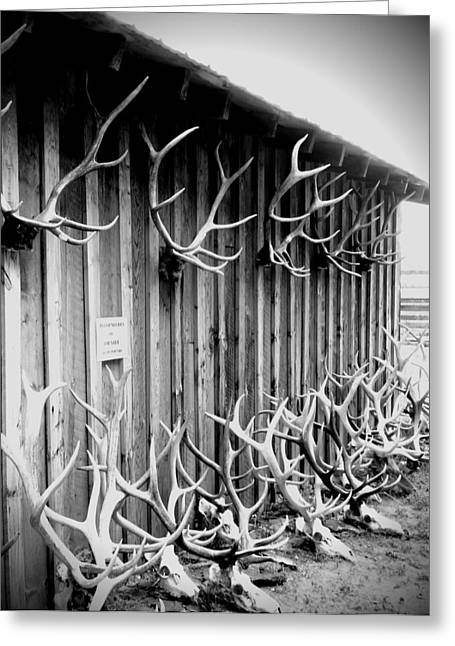 Old Barns Greeting Cards - Antlers Greeting Card by Dan Sproul