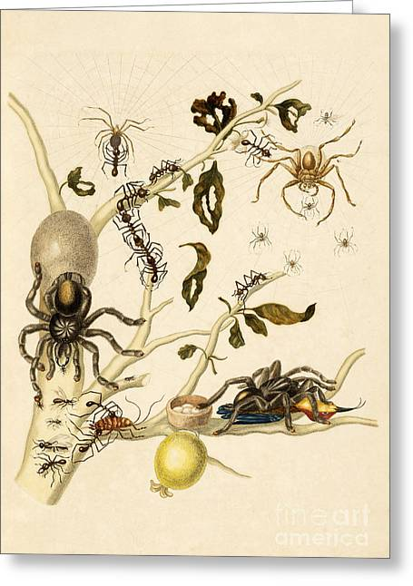 Huntsman Photographs Greeting Cards - Ants Spiders Tarantula and Hummingbird Greeting Card by Getty Research Institute