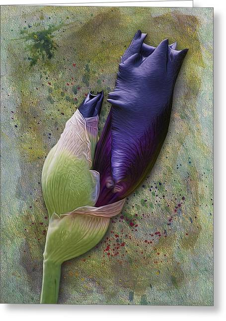 Iris Digital Art Greeting Cards - Any Day Now Greeting Card by Susan Candelario