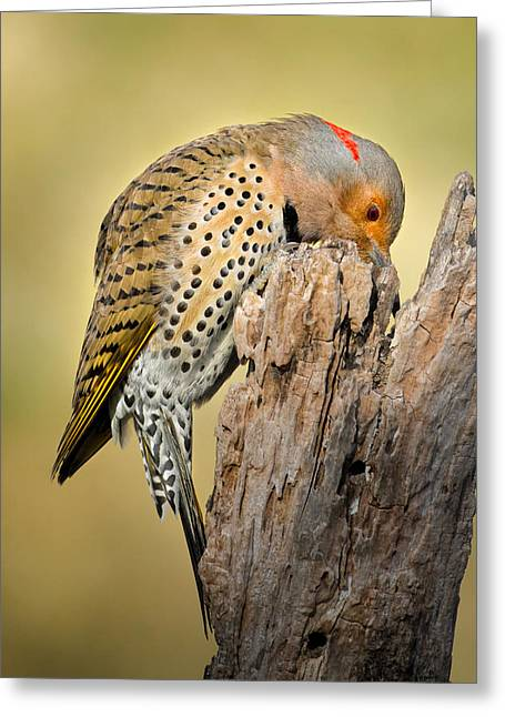 Backyard Wildlife Greeting Cards - Any nuts Greeting Card by Bill  Wakeley