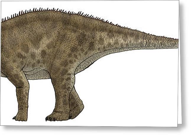 Brontosaurus Greeting Cards - Apatosaurus, A Sauropod Dinosaur Greeting Card by Vitor Silva