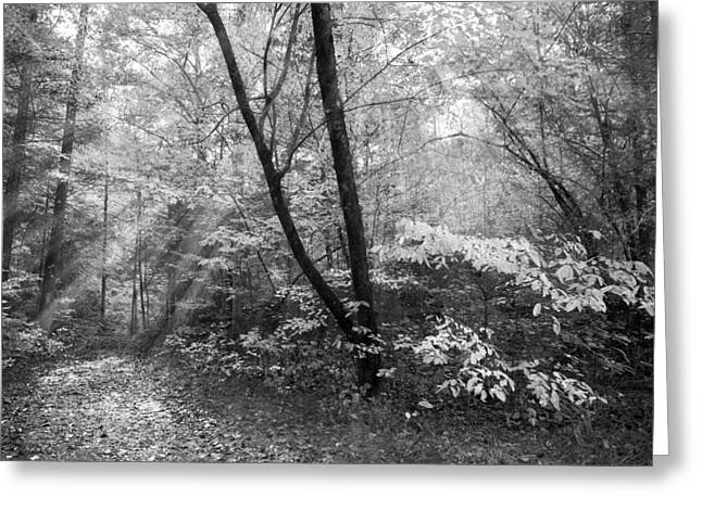 White River Scene Greeting Cards - Appalachian Mountain Trail in Black and White Greeting Card by Debra and Dave Vanderlaan