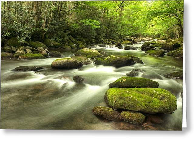Appalachian Spring Stream Greeting Card by Phyllis Peterson