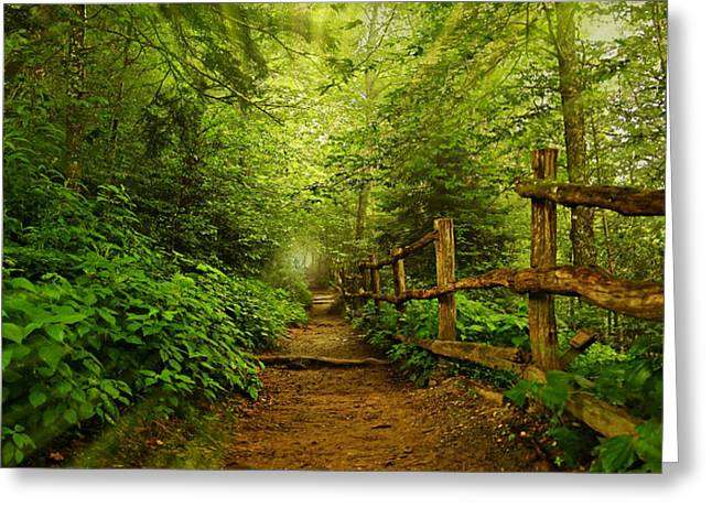 Gatlinburg Tennessee Greeting Cards - Appalachian Trail at Newfound Gap Greeting Card by Stephen Stookey