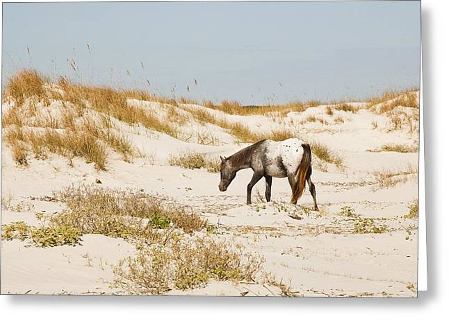 Appaloosa Beach Greeting Card by Barbara Kraus - Northrup