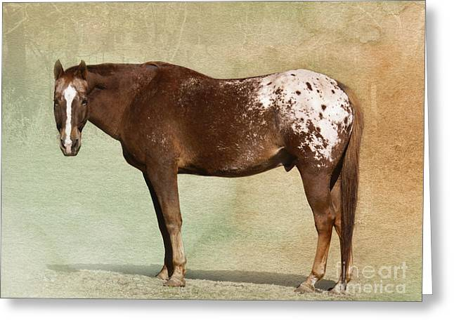 Spotted Horse Greeting Cards - Appaloosa Greeting Card by Betty LaRue