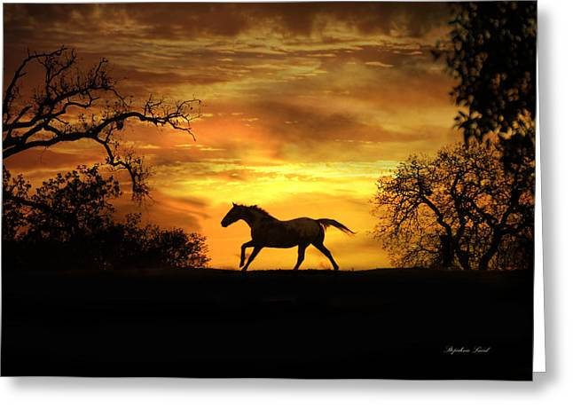 Wild Horses Greeting Cards - Appaloosa Sunset Greeting Card by Stephanie Laird