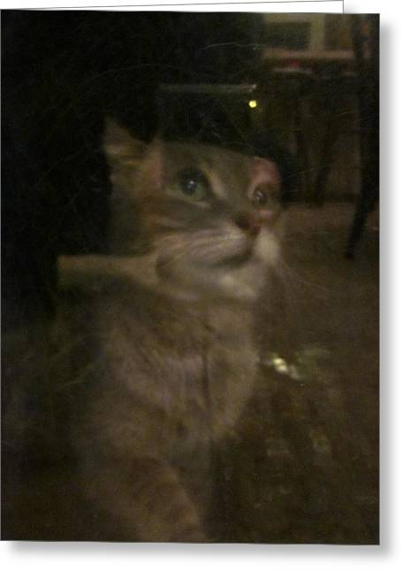 Photos Of Cats Photographs Greeting Cards - Apparition of Lucy Greeting Card by Guy Ricketts