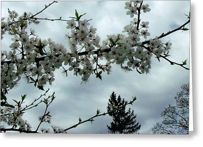 Purchase Greeting Cards - Apple Blossom against the Sky Greeting Card by Gail Matthews
