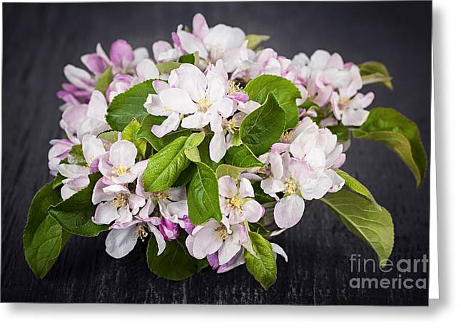 Green Leafs Greeting Cards - Apple blossom bouquet Greeting Card by Elena Elisseeva