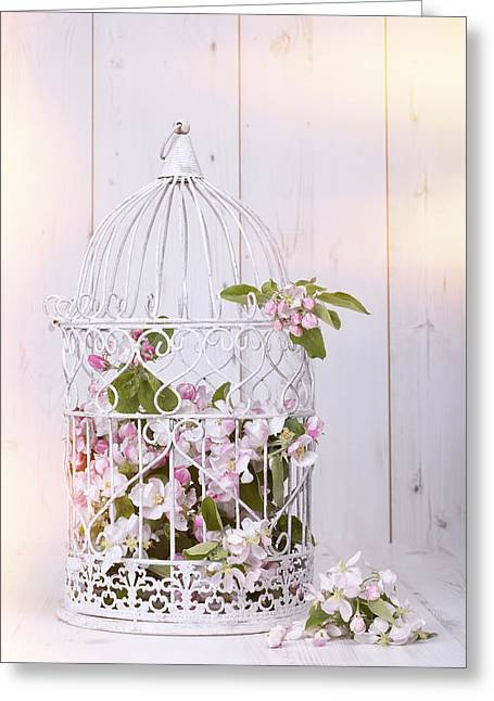 Bird Cages Greeting Cards - Apple Blossom Greeting Card by Amanda And Christopher Elwell
