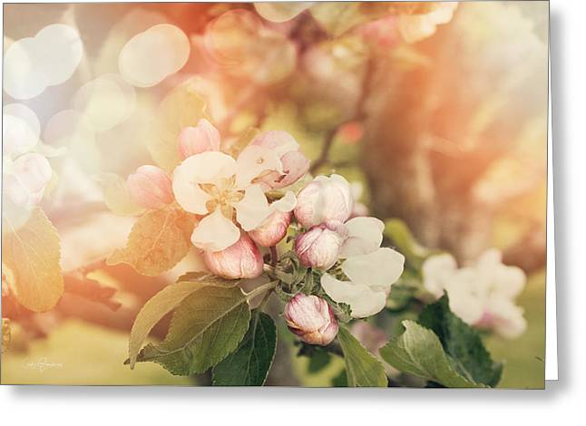 Cindy Grundsten Greeting Cards - Apple Blossom Greeting Card by Cindy Grundsten