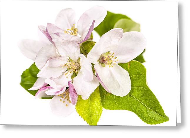 Square Format Greeting Cards - Apple blossom Greeting Card by Elena Elisseeva