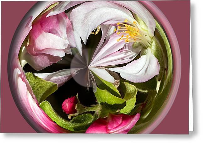 Stamen Digital Art Greeting Cards - Apple Blossom Globe Greeting Card by Phyllis Denton