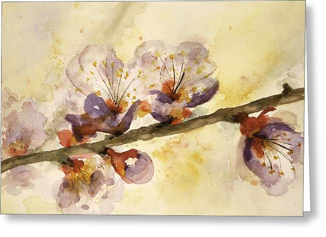 Watercolor Greeting Cards - Apple Blossom Greeting Card by Lynne Furrer