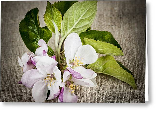 Cloth Greeting Cards - Apple blossom on linen Greeting Card by Elena Elisseeva