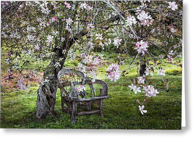 Pear Art Greeting Cards - Apple Blossom Shower Greeting Card by Debra and Dave Vanderlaan