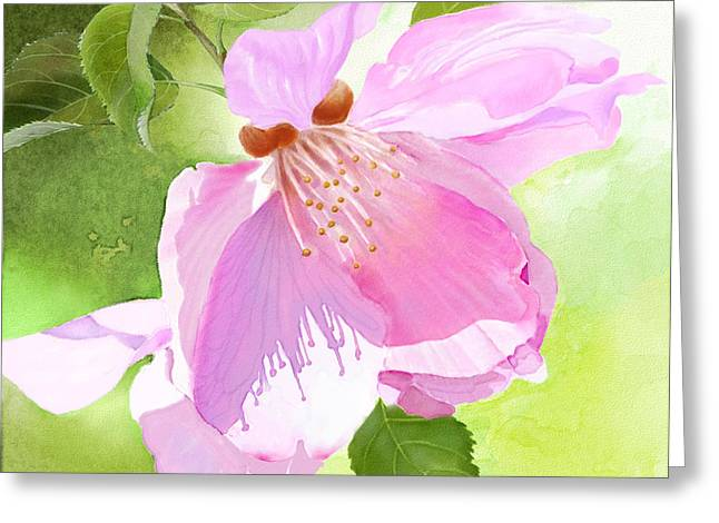 Watercolour Greeting Cards - Apple Blossom Three Greeting Card by Joan A Hamilton