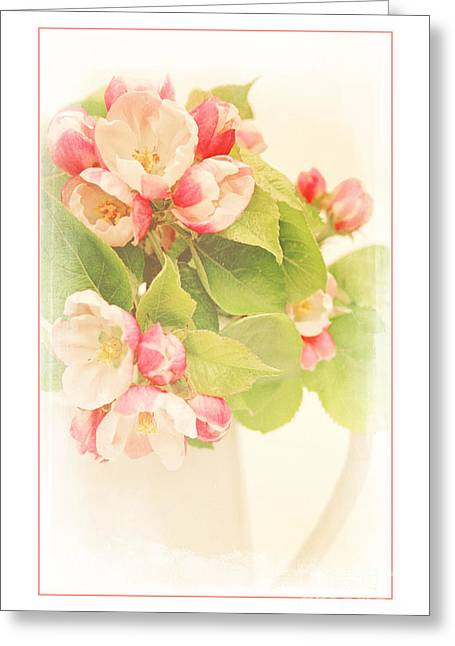 Shabbychic Greeting Cards - Apple Blossom Time Greeting Card by ShabbyChic fine art Photography